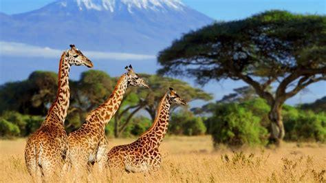 Clima Kenia – Temperatura • Mejor época para viajar • Tiempo