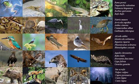 Climas mediterraneos: Fauna