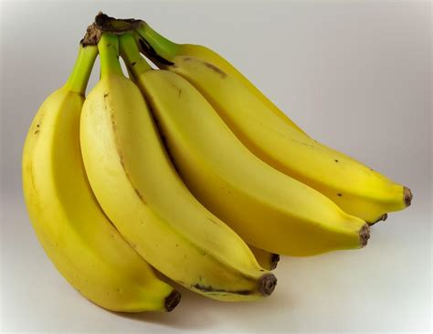 Climate Change And The Demise Of The Cavendish Banana ...