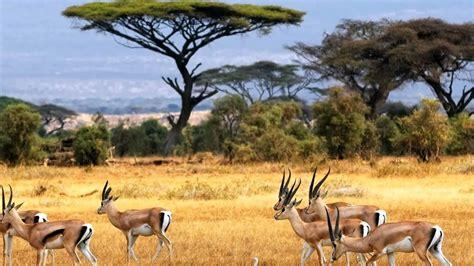 Climate of Kenya | KenyanSandals.com   YouTube