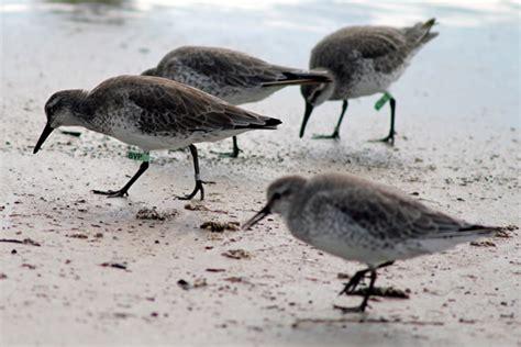 Coastal Bird Program :: CBBEP