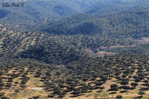 Cobijo Camijanes: Habitantes del bosque mediterráneo