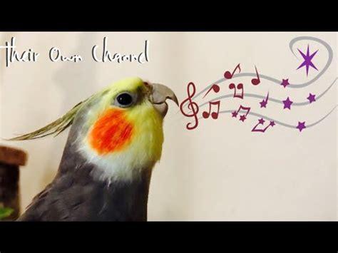 Cockatiels Singing/ Ninfas Cantando / Cockatiel Chantant ...
