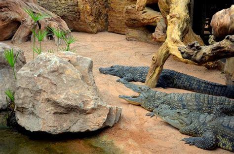 cocodrilos Bioparc Valencia | Valencia, Cocodrilos, Animales