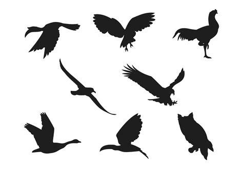 Coleções da silhueta do pássaro   Download Vetores e ...