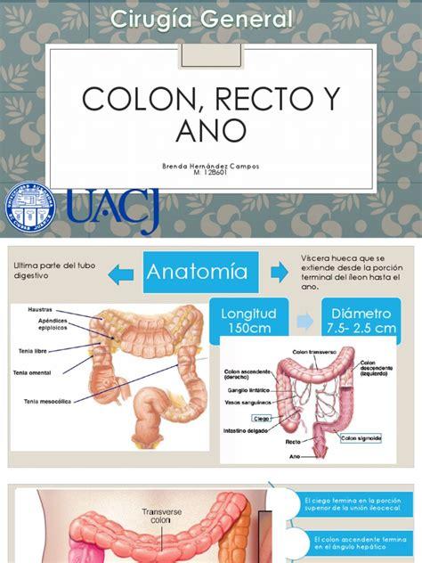 Colon, Recto y Ano   Enfermedad de Crohn   Intestino grueso