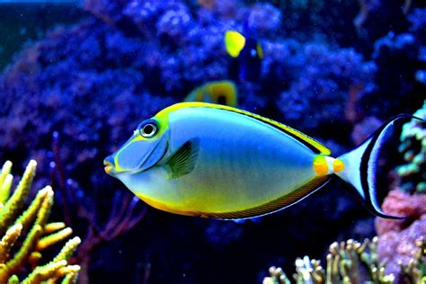 colorful fish in the aquarium by xbiscuits on DeviantArt
