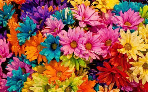 Colorful Flowers Fondo de pantalla HD | Fondo de ...