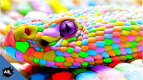 Colorful Giant Snakes! SnakeBytesTV Ep. 413 ...