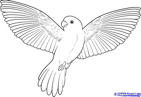 Coloring Pages Of Birds Flying | Bird drawings, Bird sketch