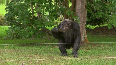 Com verão intenso, animais do Zoo de Curitiba recebem ...