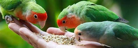 Comida pájaros MERCADONA precio, Análisis y opinión sobre ...
