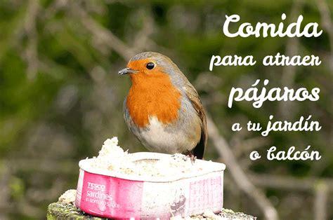 Comida para atraer pájaros al jardín o balcón   Plantea En ...