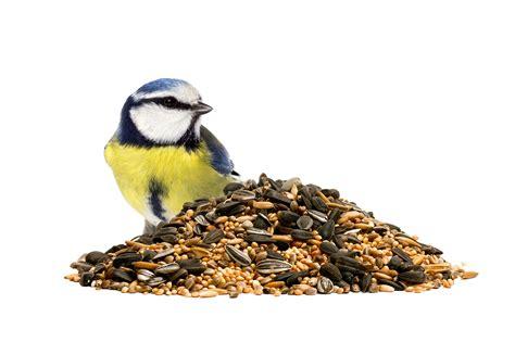 Comida para pájaros en Barcelona