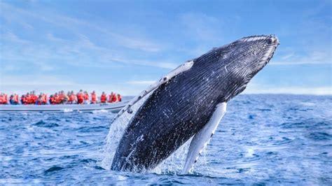 Comienza la temporada de ballenas en México, 7 lugares ...