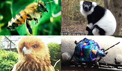 Common  animal species are not that common and rare ...