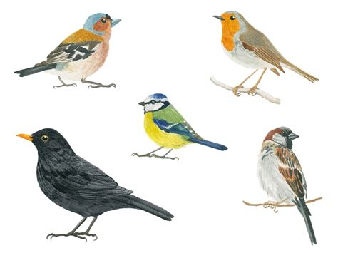 Common European Birds – An Ongoing Painting Project ...