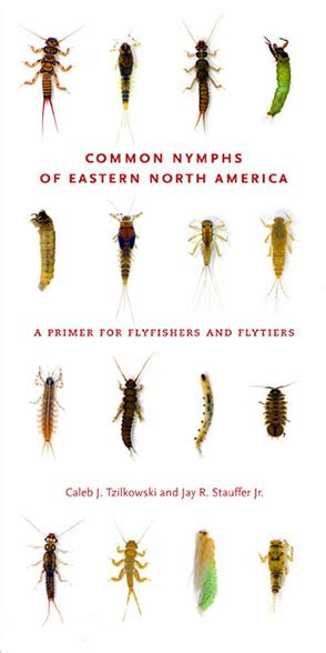 Common Nymphs of Eastern North America: A Primer for ...