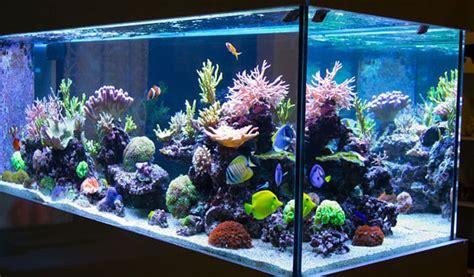 ¿Cómo alimentar a los peces de su acuario?   KienyKe
