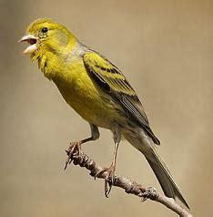 ¿Cómo cantan los pájaros?