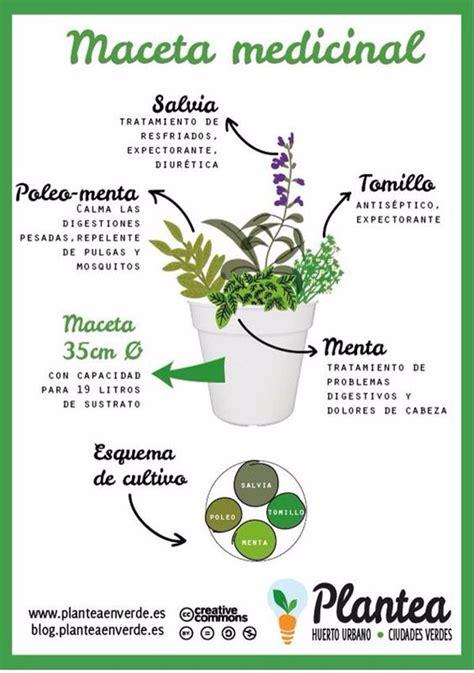 ¿Cómo combinar plantas curativas para hacer una maceta ...