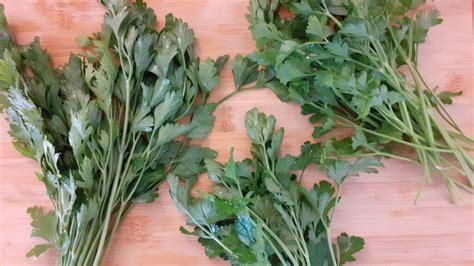 Cómo conservar hierbas aromáticas frescas   Notas Naturales