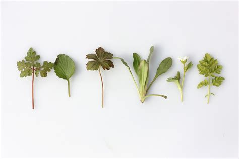 Cómo conservar hierbas aromáticas y condimentos