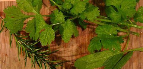 Cómo conservar las hierbas aromáticas | Herbs, Drying ...