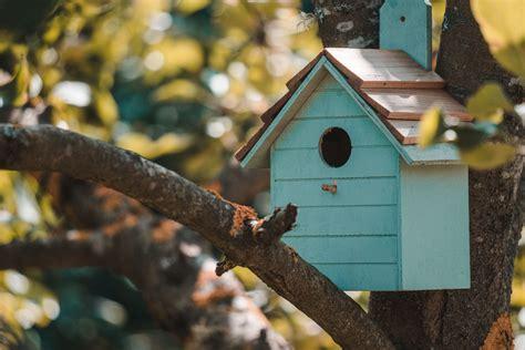 Cómo construir con tus manos una casa para pájaros