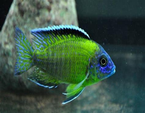 Cómo cuidar peces tropicales paso a paso