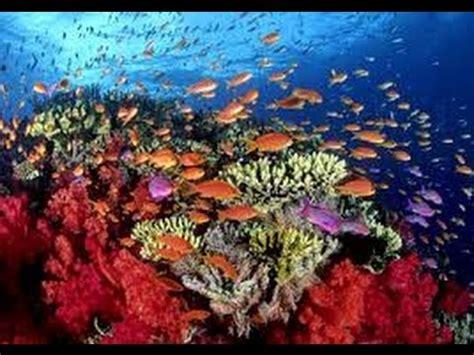 Como Cultivar Corales para Salvar los Arrecifes en el Mar ...
