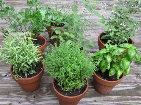 Cómo cultivar plantas aromáticas en casa. Plantas ...