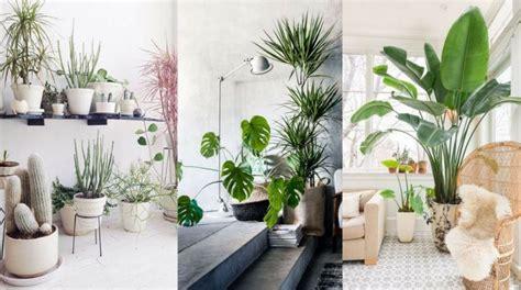 ¿Como decorar con plantas en el interior de tu hogar ...