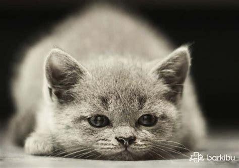 Cómo desinflamar el ano de un gato y aliviar su dolor ...