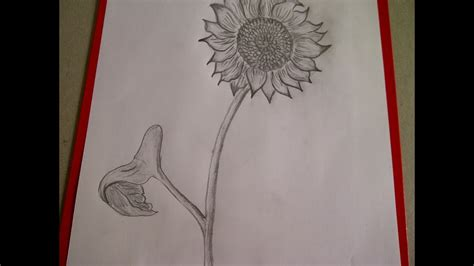 Como dibujar flores. Como dibujar un girasol. Como hacer ...
