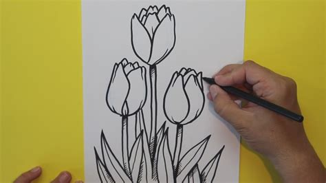 Cómo dibujar Tulipanes  Flores    How to draw Tulips ...