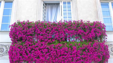 Cómo elegir las plantas para el balcón   Flores y plantas ...