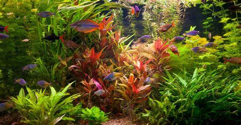 Cómo elegir plantas para acuario | Blog Verdecora