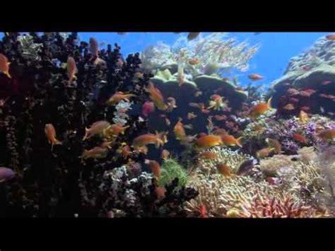 Cómo es el fondo del mar   YouTube