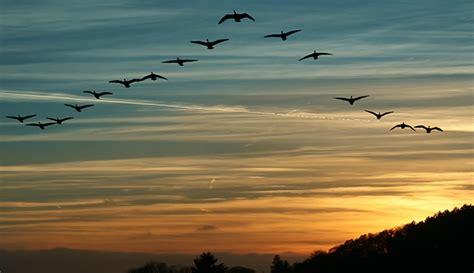 Cómo es la Migración de las aves a África: ver online ...