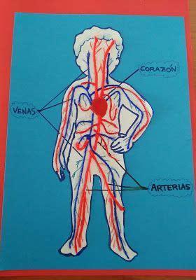 Cómo explicar qué es el sistema circulatorio a un niño de ...