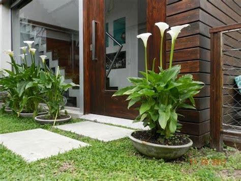como hacer un jardin hermoso en casa   YouTube