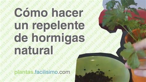 Cómo hacer un repelente de hormigas natural | facilisimo ...