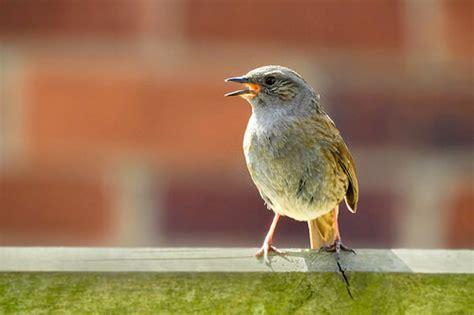 ¿Cómo identificar pájaros por su canto?   My Animals