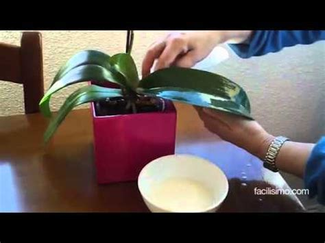 Cómo limpiar las hojas de las plantas | facilisimo.com ...