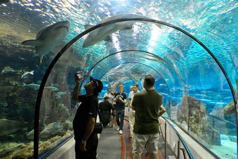 Como Llegar Al Aquarium De Barcelona En Metro – Mednifico.com