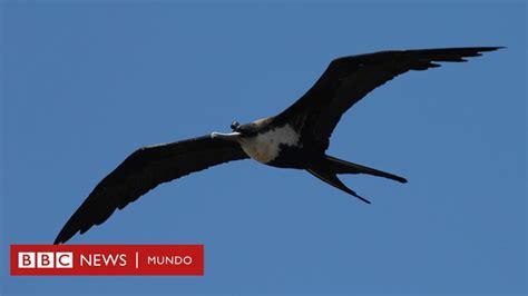 ¿Cómo logran las aves dormir en pleno vuelo sin caerse ...