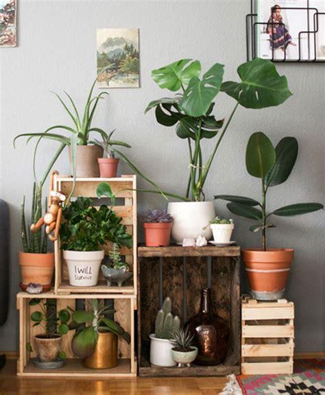 Cómo lucir tus plantas