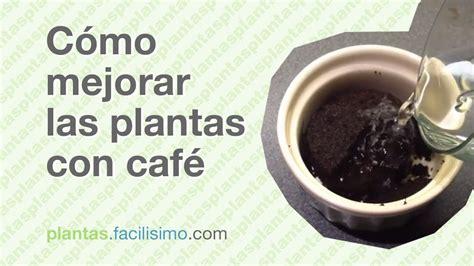 Cómo mejorar las plantas con café | facilisimo.com   YouTube