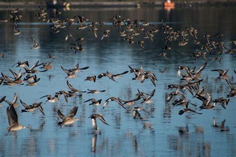 ¿Cómo pueden las aves migratorias volar 10,000 kms sin ...